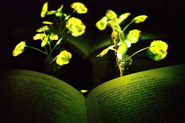 Mit glowing plants 0